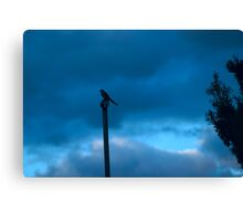 bird not on a wire Canvas Print