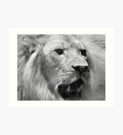 Lion face on Art Print