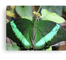 Green Butterfly Canvas Print