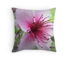 The Beauty of One Flower (Nectarine Blossom) Throw Pillow