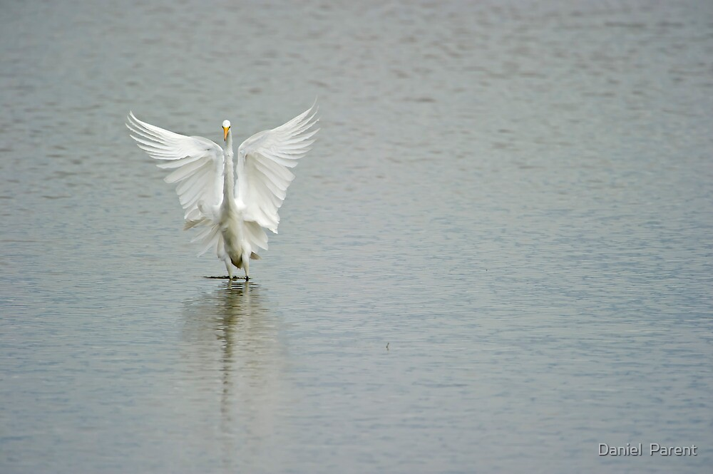 Angel Wings by Daniel  Parent
