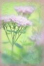 Enchanted garden 1 by aMOONy