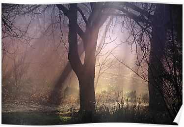 Misty Morning Light - Tollcross Park Glasgow Scotland UK Europe by simpsonvisuals