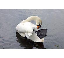 Swaning around (2) - river swan Photographic Print