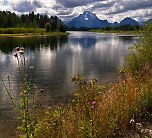 Mountains and Wildflowers by Kathy Weaver