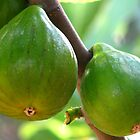 Figs by Vittorio Magaletti