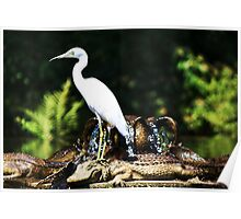The Egret and the Alligator Poster