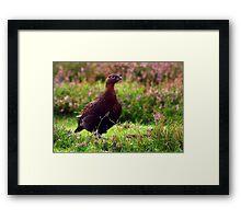 Grouse #1 Framed Print
