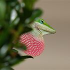 Lizard (green anole) with his redbubble by imagetj