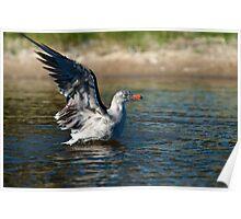 Water landing Poster