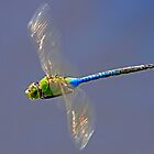Dragonfly by Debbie  Roberts