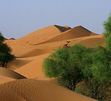 Dunes and Ghaf  by David Clark