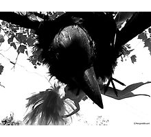 Barbie Attacked by Giant Monsterbird Photographic Print