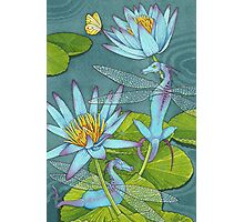 Dragonflies and Lotus Photographic Print