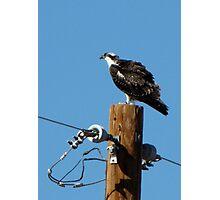 Osprey ~ Marana, AZ Photographic Print