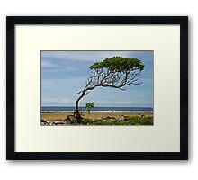 Lone Tree, Jaluit Atoll Framed Print