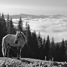 Huculian horses over the clouds by Oleksiy Rybakov