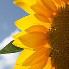 sunny side by yvesrossetti