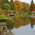 Japanese Gardens, Washington Park Arboretum by Barb White