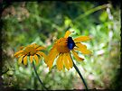 Blue on Yellow by Lucinda Walter