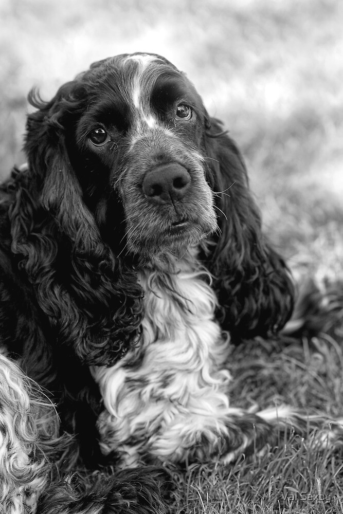 My Boy by Val Saxby