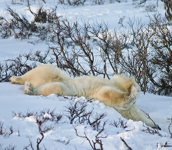 Yoga Bear slide by Owed to Nature