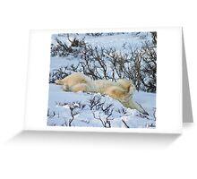 Yoga Bear slide Greeting Card