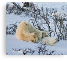 Yoga Bear stuck Canvas Print