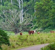 Cows in a rainforest pasture by sharka69