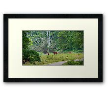 Cows in a rainforest pasture Framed Print