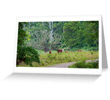 Cows in a rainforest pasture Greeting Card