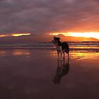 Dog on beach - The Maharees, County Kerry, Eire by BlackhawkRogue