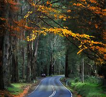 Autumn in the Dandenong Ranges by Peter Hammer