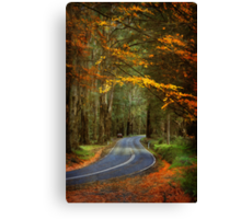 Autumn in the Dandenong Ranges #2 Canvas Print
