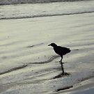 Black Bird by vanessalaurel