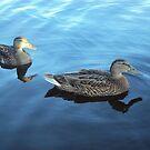Ducks by vanessalaurel