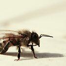 Buzzzzy Bee by Tamara Brandy