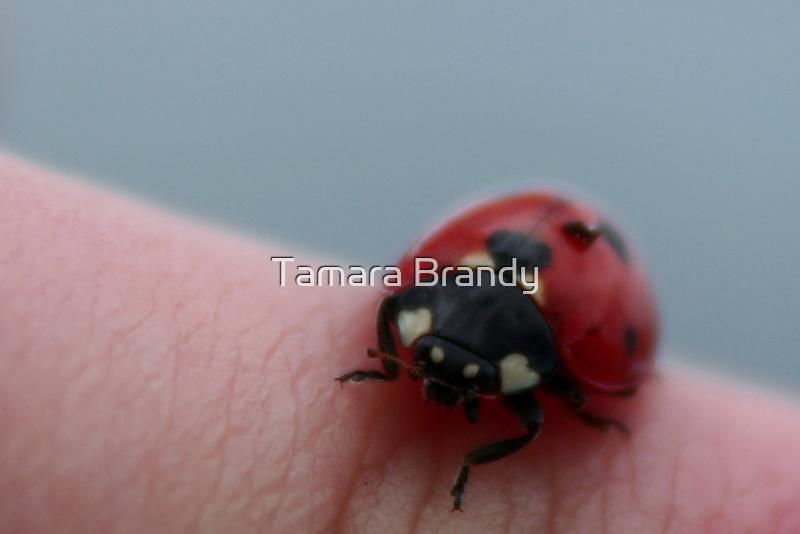 Ladybug, Ladybug by Tamara Brandy