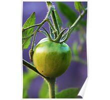 Green Tomatoe Poster