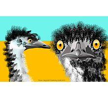 Emus Photographic Print