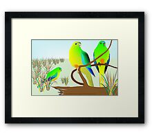 Orange Bellied Parrots Framed Print