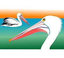Pelicans Photographic Print