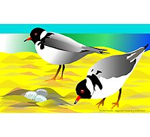 Hooded Plovers Photographic Print