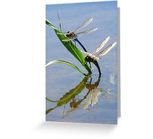 Dragonfly Love ~ Common Green Darner Greeting Card