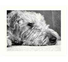 Dexter Jones - Welsh Terrier Art Print