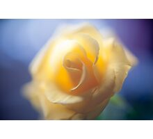 Anniversary Rose Photographic Print