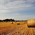 Hay Bales in Donegal by paws4life