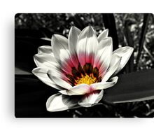 Focal Pink Canvas Print