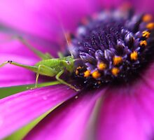 Little Spring Grasshopper by yolanda