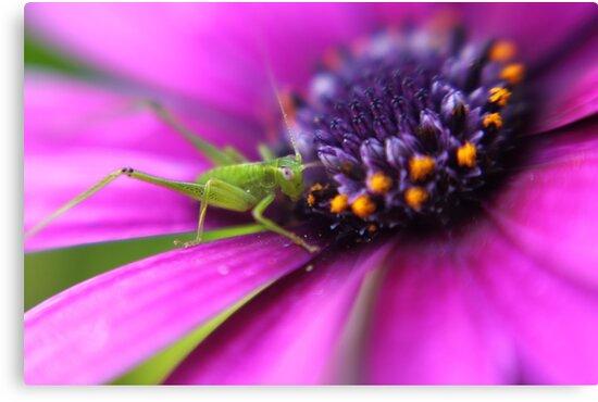 Little Spring Grasshopper by yolanda